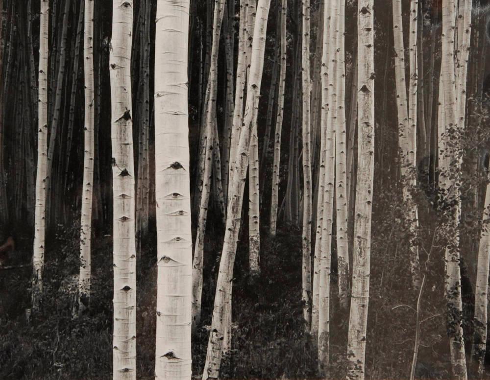 Aspen, Dusk by John Sexton 1983