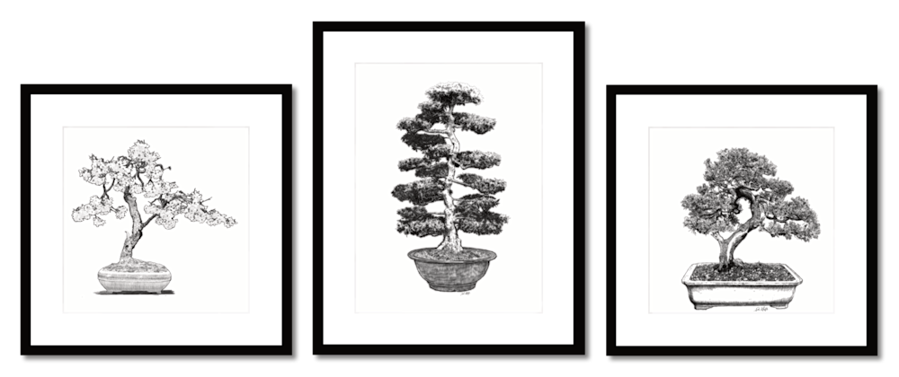 Bonsai group 1b