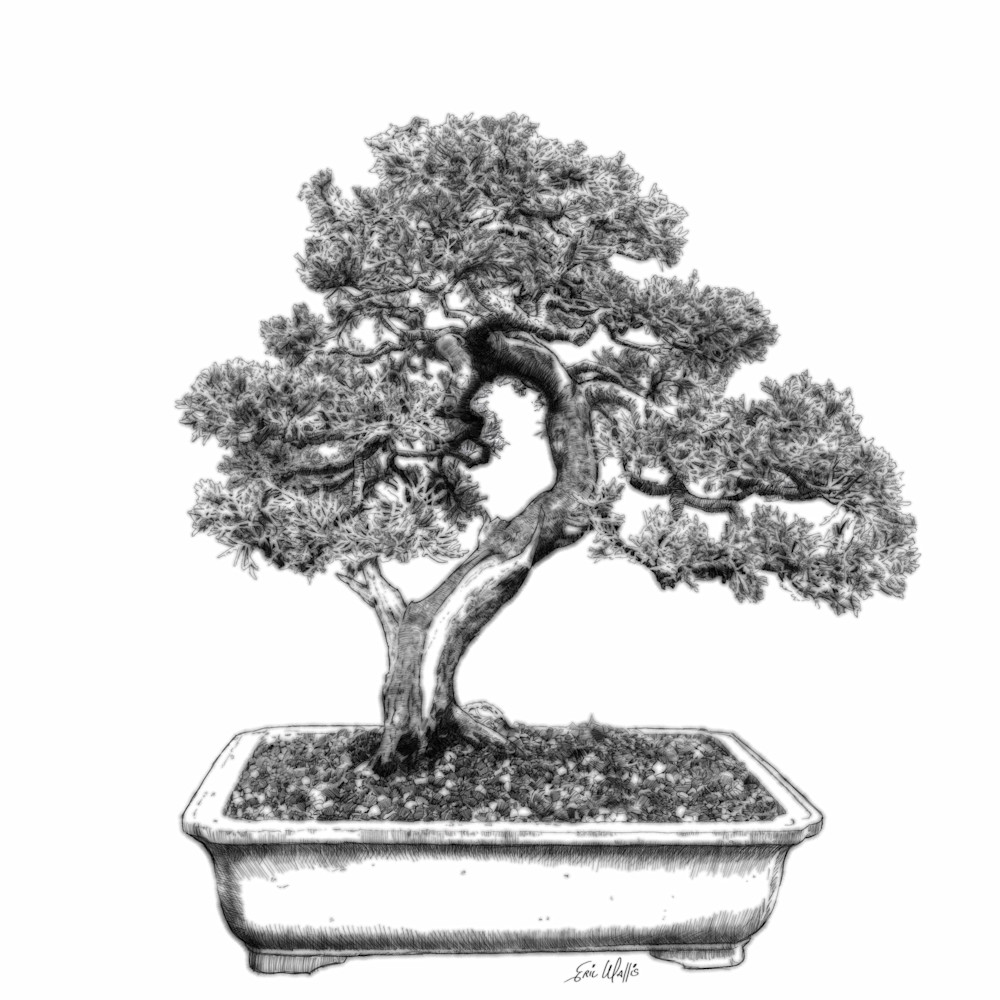 Bonsai Two