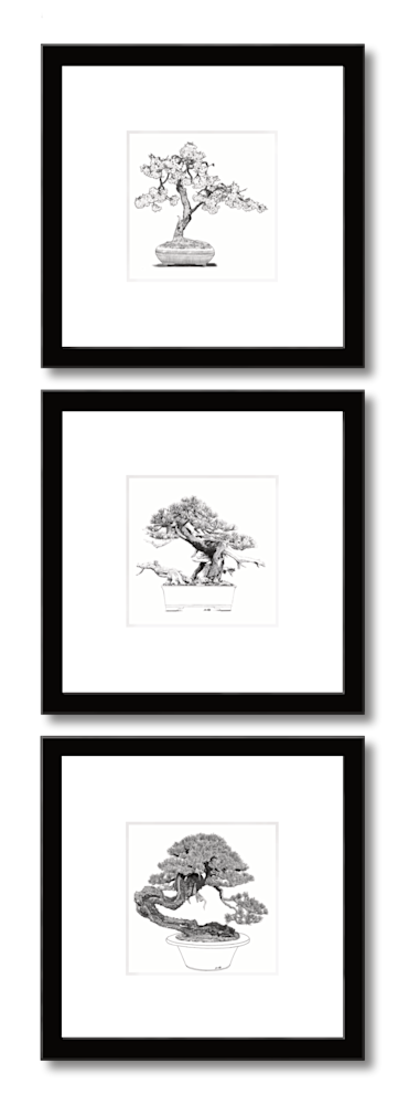 Bonsai prints in a vertical group of 3 by Eric Wallis