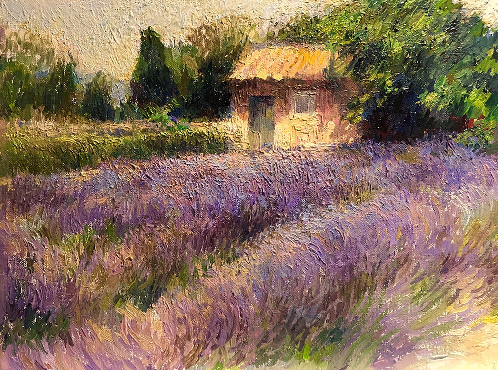 Collymore Provencal Sunlight on Lavender and Garden Shed, St