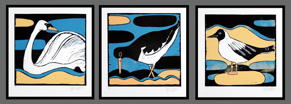 oyster tern swan
