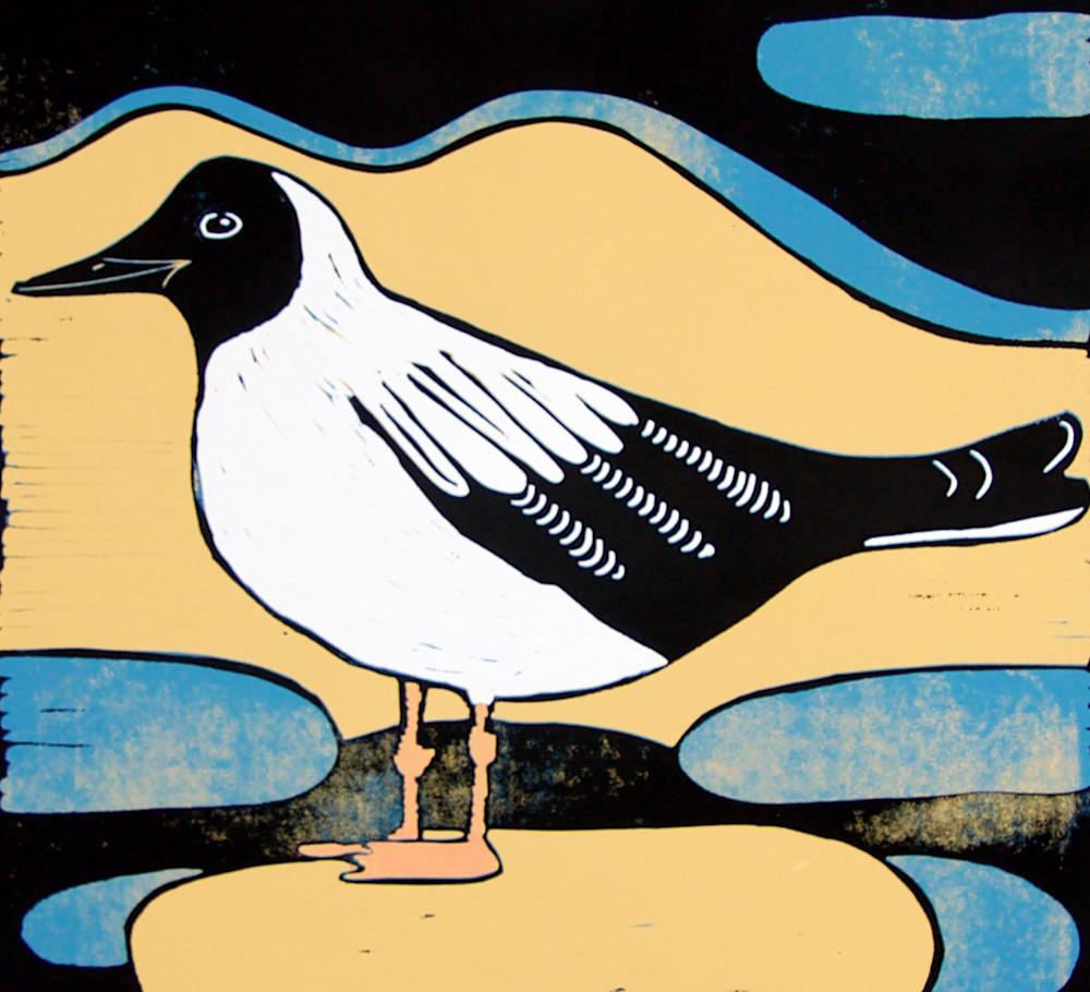 tern bird
