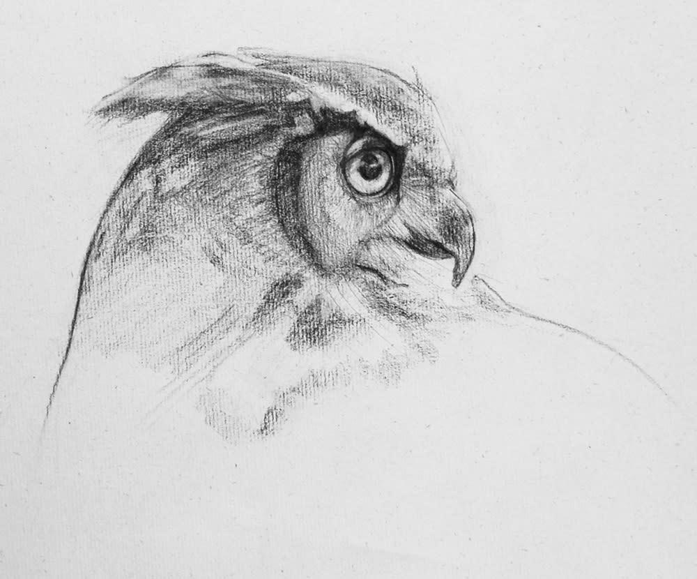 owl2 Gelfuso