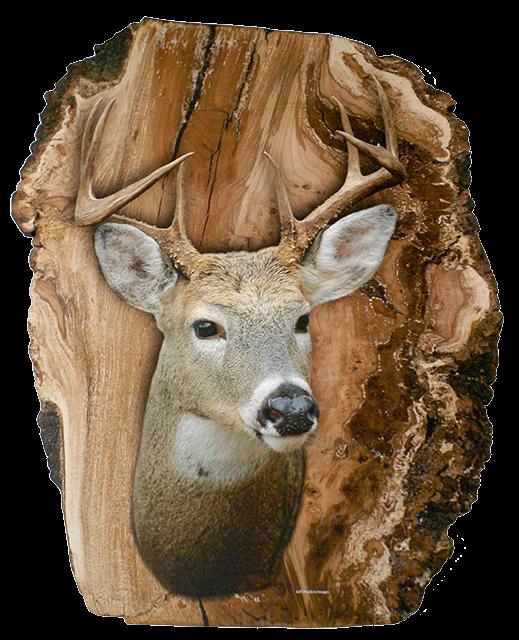 deer log02