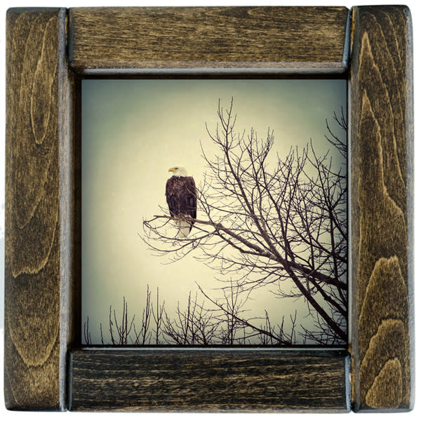 Eagle Framed