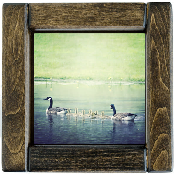 Baby Geese Framed
