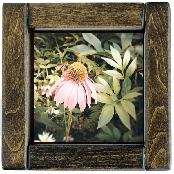 Pink Cone Flower Framed