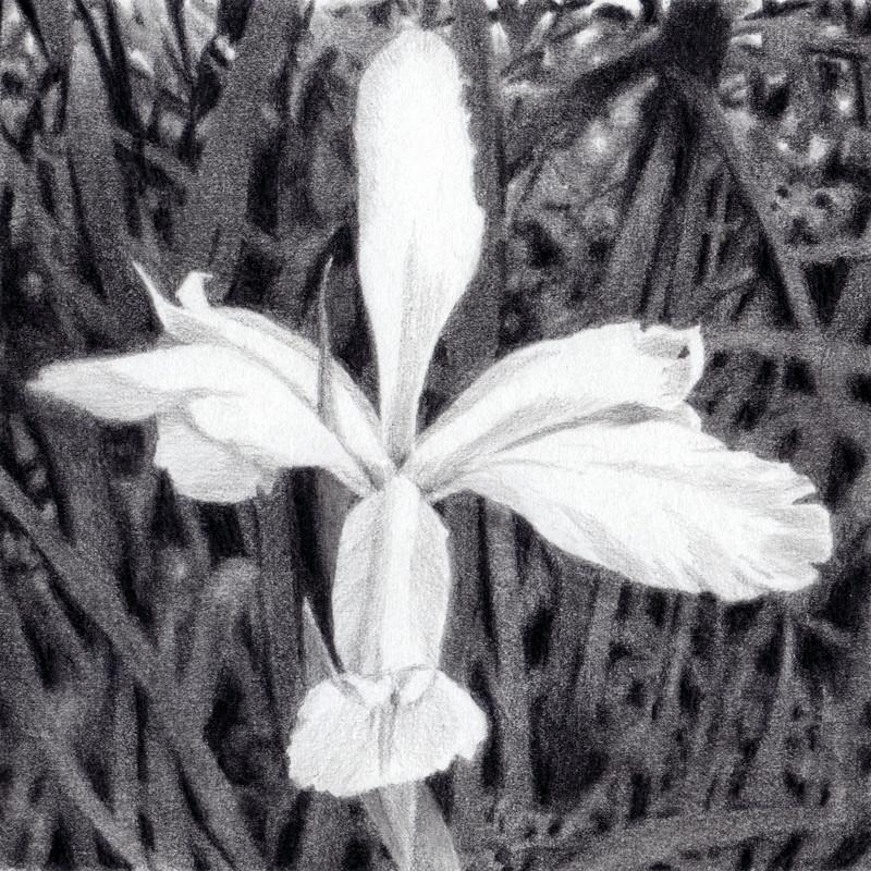 Iris clean