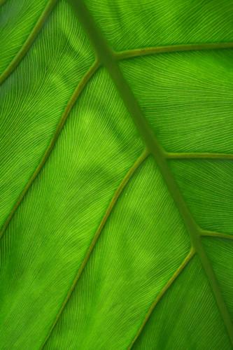 Kalo pattern dd1873 oczuad