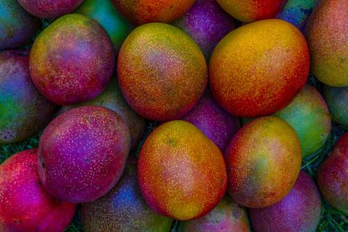 Many mangoes ww021 igyikd