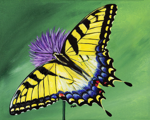 Tiger Swallowtail On Purple Echinacea