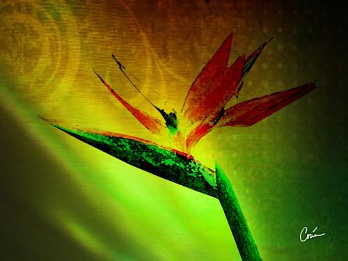 Corinabakke birdofparadise ro507l