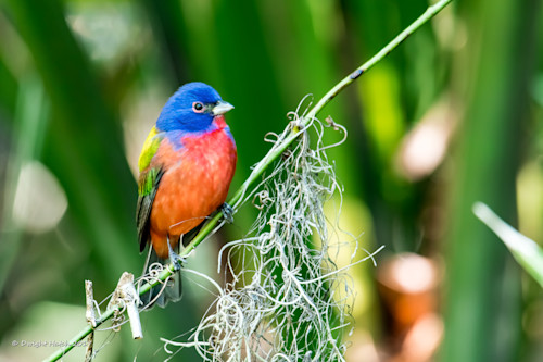 Hatch_paintedbunting_3657-2_prxqow