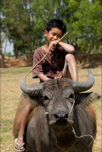 Photograph Art Print Of Cute Boy Posing On Water Buffalo