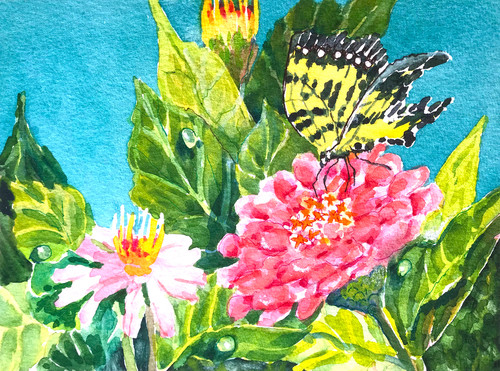 Happiness in a butterfly and pink zinnias cleveland bot gard rzfsmk