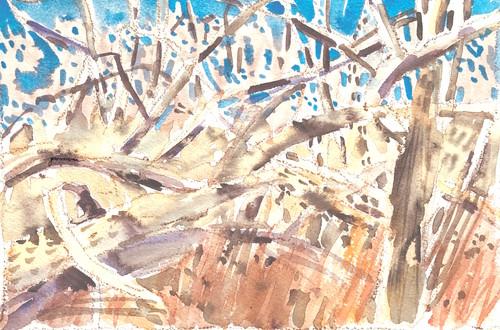 Winter_woods_tangle-jmmason_lrg-175p_tksy0s