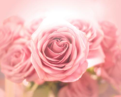 Flowers-_mavtwv