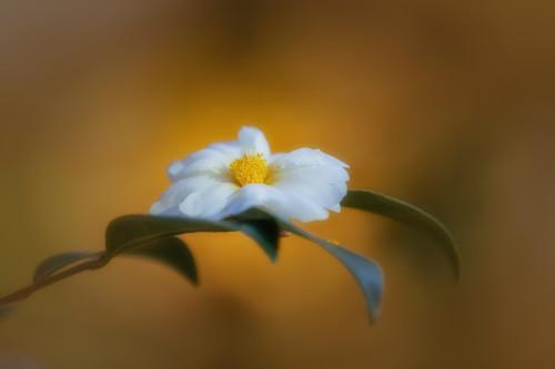 Flowers--16_etwlyy