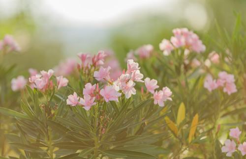Flowers 1577 uodvfm