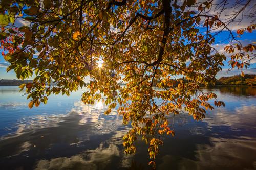 Leaves--2_vmcgb8