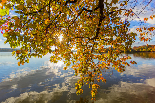 Leaves  3 tm9liz