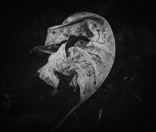 Leaves--17_y4an7k