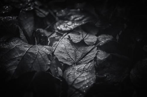 Leaves--15_lfzk1u