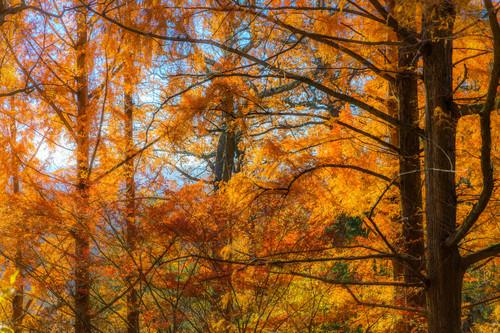 Trees--34_bxziwg
