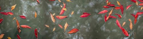 Red leaves on water mnib4k
