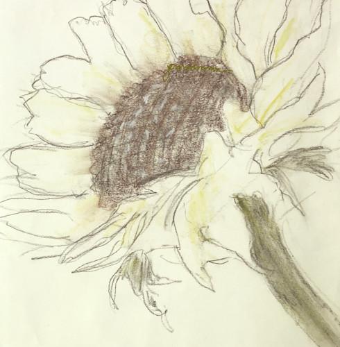 Sunflower_drawing-_jmmason_siglg_x30bzm