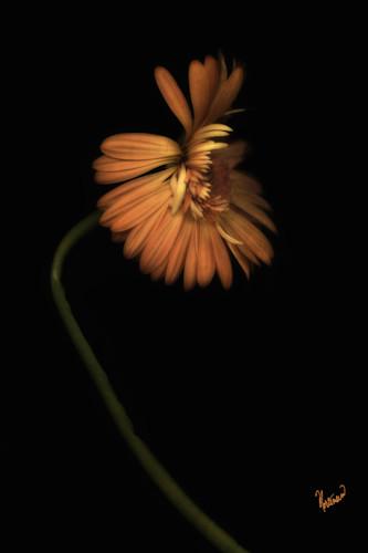 Flowers 19 bqt4b4