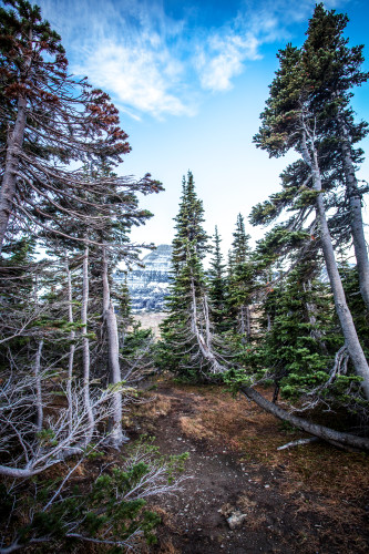 Montana mountains trees forest nationalpark vertical wezzw1