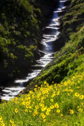 Wildflowers ov7ngk