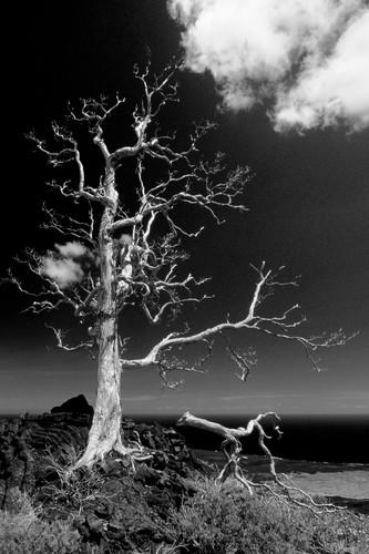 Skeletontreeas_vuc9j6