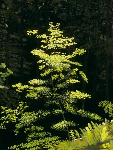 20587 brendan kramp 1   portland tree 100mb idfynb