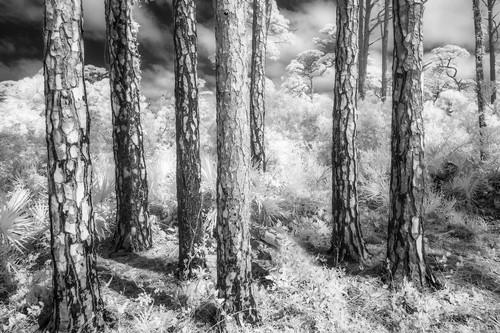 Pinepatternsas_gxpdg7