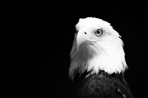 American bald eagle 3   dsc4134 4 cylb6l