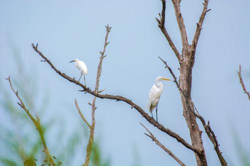 Florida birds   dsc4860 hupnvd