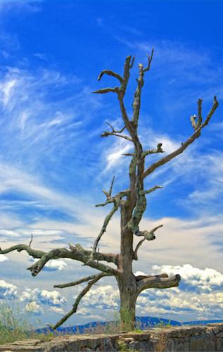 Lonely tree glgg2b