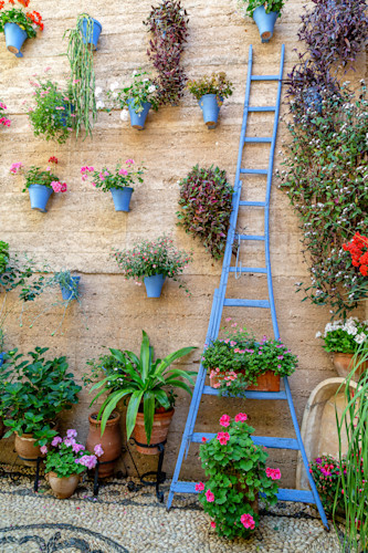 Patio_tour_with_blue_ladder_cordoba_spain_44x66_optimized_hoq6af