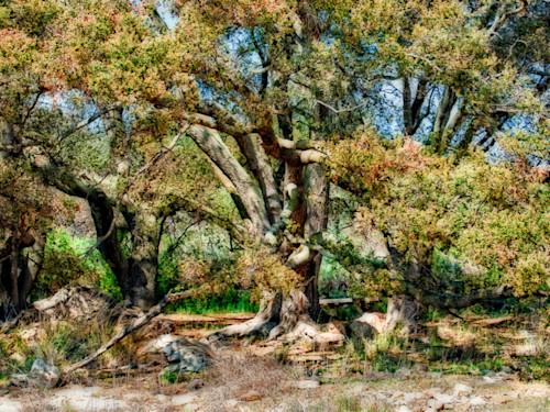 Gramdfather tree ddymqi