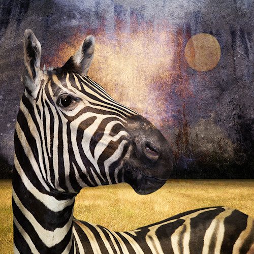 The zebra xaygv8