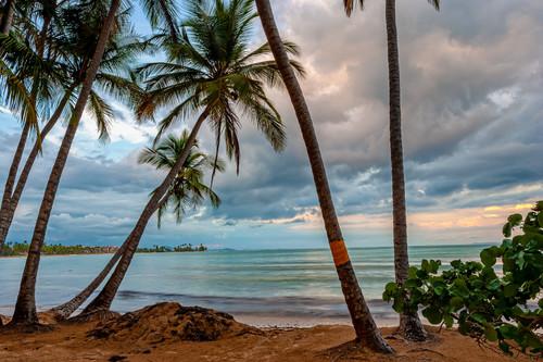 Humacao natural preserve puerto rico. hejl6p