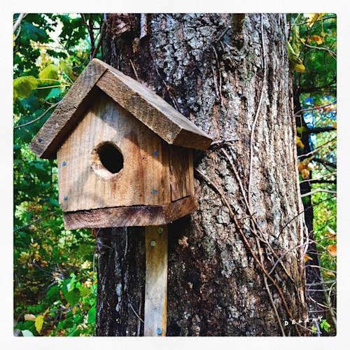 F birdhouse1 h9wnce