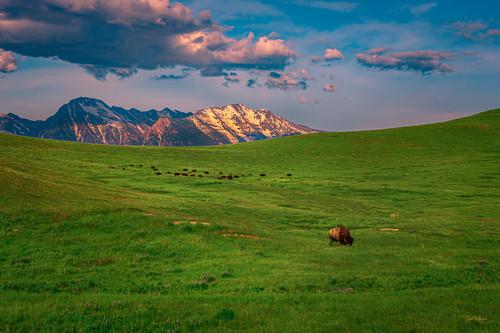 National bison refuge uvjswy