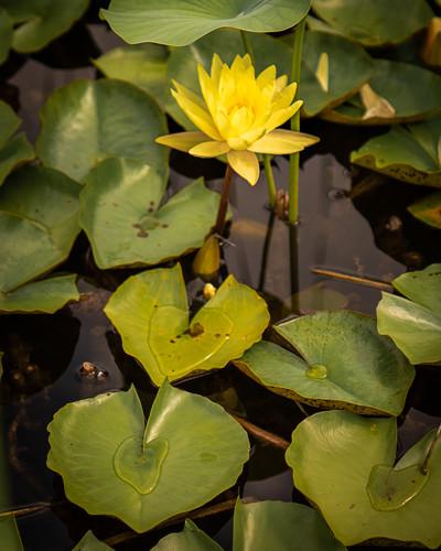 2016 july reiman gardens 57 jj1h2k