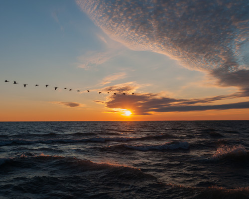 Sunrise with geese xftcct