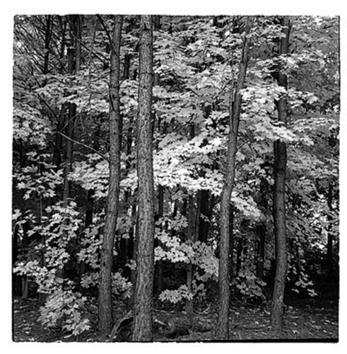 Fall leaves 3 copy vv3kjr