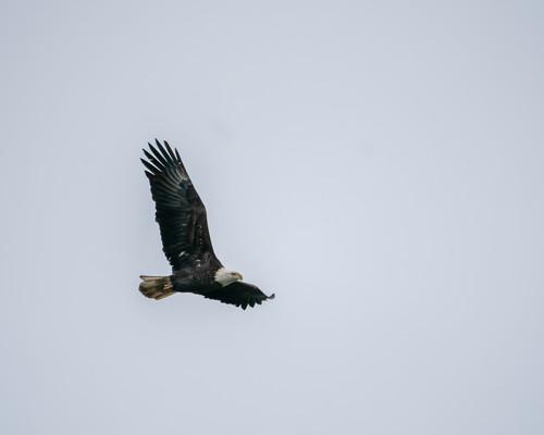 Eagles 367 pktdwa